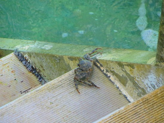 De Palm Island: Mr. Crab