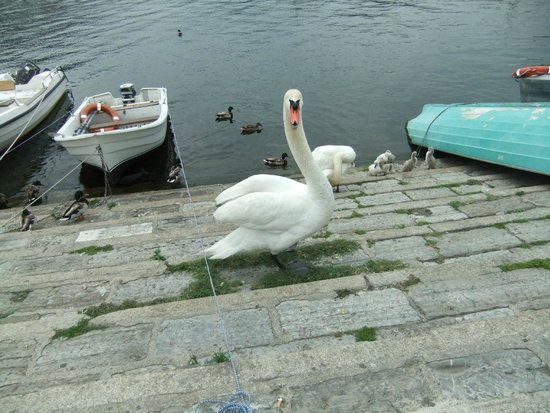 "In Riva al Lago Bed & Breakfast: ""The Swan Family"""