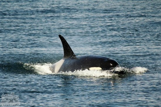 San Juan Excursions: Awesome creatures!!