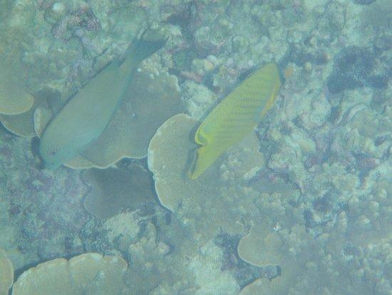 Treasure Island Resort: Snorkelling