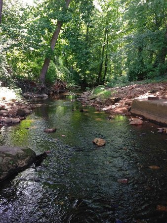 Historic Yates Mill County Park: Downstream of the mill