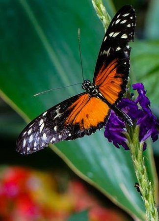 Franklin Park Conservatory and Botanical Gardens : Butterfly Exhibit at Franklin Conservatory