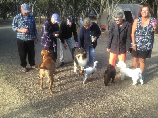 Anglesea Beachfront Family Caravan Park: Met some lovely people and pups.