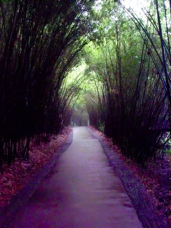 Giant Panda Breeding Research Base (Xiongmao Jidi): Pathways through the center