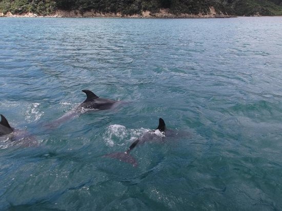 Resolution Bay Cabins: dolphins