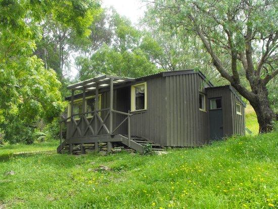 Resolution Bay Cabins: woodpigeon