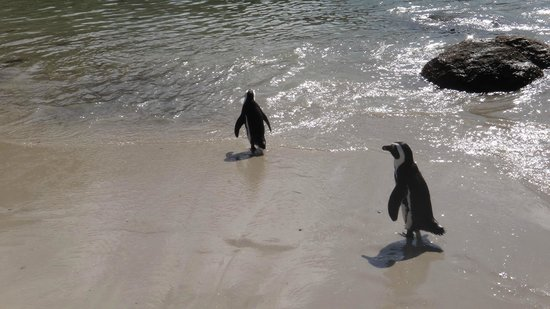 Boulders Beach: Pingüinos