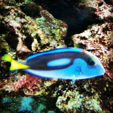 ZSL London Zoo : where's Nemo?