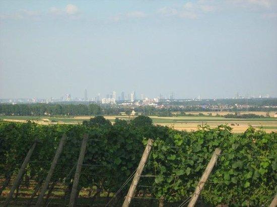 Floersheimer Warte: view to Frankfurt over the vineyards