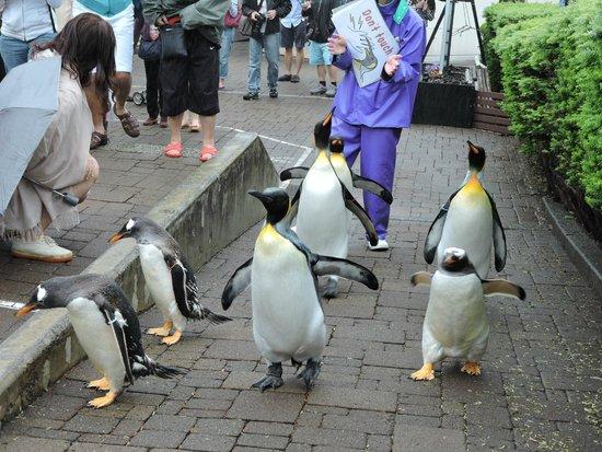 Noboribetsu Marine Park Nixe : penguin parade