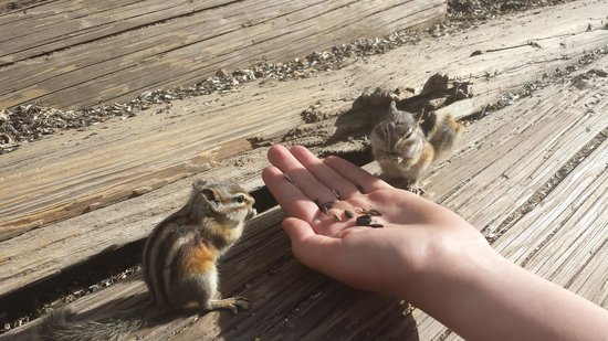 St. Elmo: feeding chipmunks