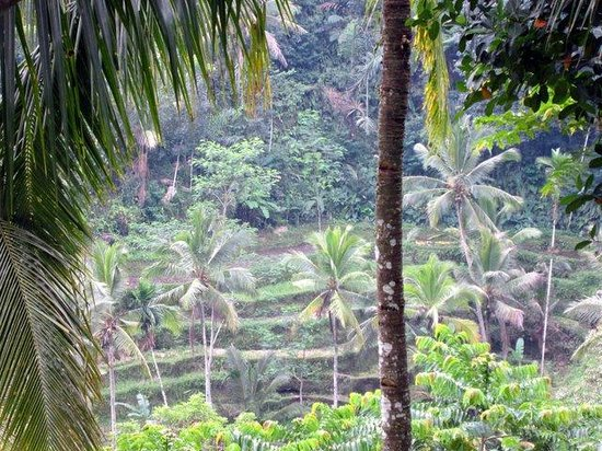 d'Alas warung: Restaurant overlooks a rice terrace.
