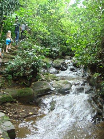 Finca Rosa Blanca Coffee Plantation & Inn: coffee tour hike- beautiful scenery