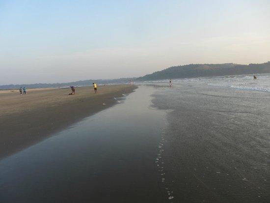 Morjim: Beach view