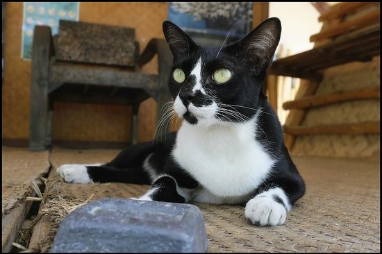 Grounded Koh Tao's Wellbeing Centre: Tai Chi the yoga kittie