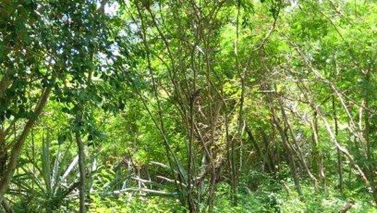 Cenotes: cenote