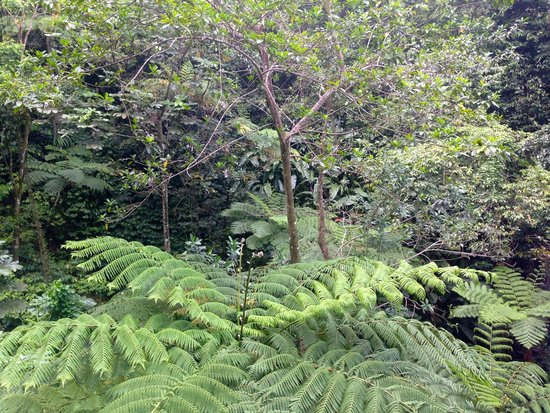 St. Lucia Rain Forest: View of rainforest