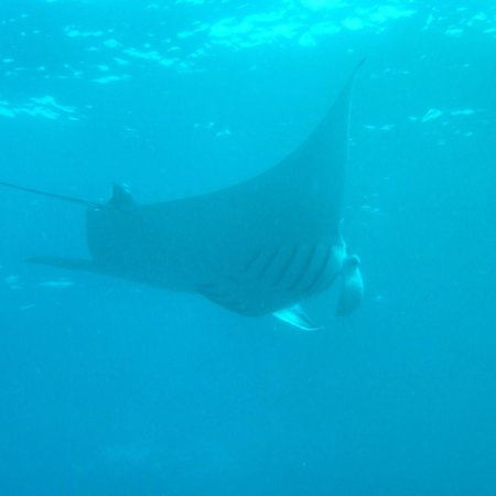 Adventure Scuba Diving Bali: Manta Ray Bay