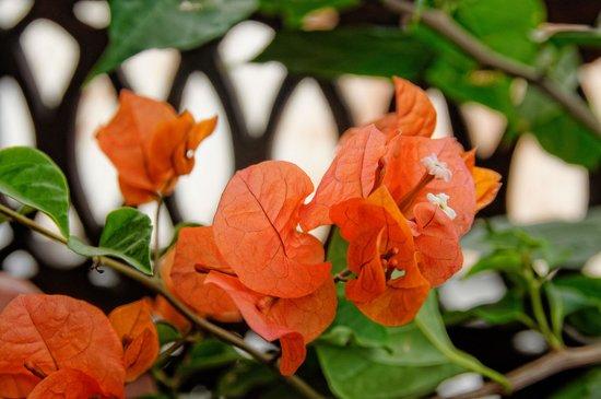 Zanzibar Palace Hotel : Romantic Suite Sultana - Balcony flowers