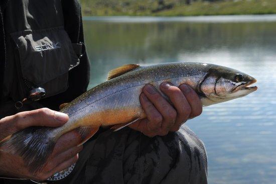 Fly Fish Zermatt: artic char caught on streamer