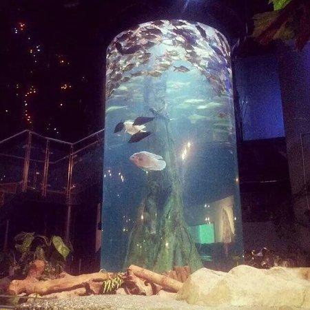 Aquaria KLCC : Inside is quite small.