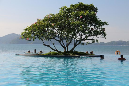 Shangri-La's Tanjung Aru Resort & Spa : Spent many hours looking out over the pool & this tree!