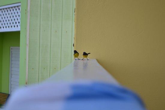 Pineapple Beach Club Antigua: Sugar Addicts