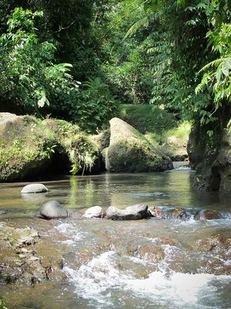 Villa Selat : the villa rests atop this beautiful river valley which is a short walk down into the forest