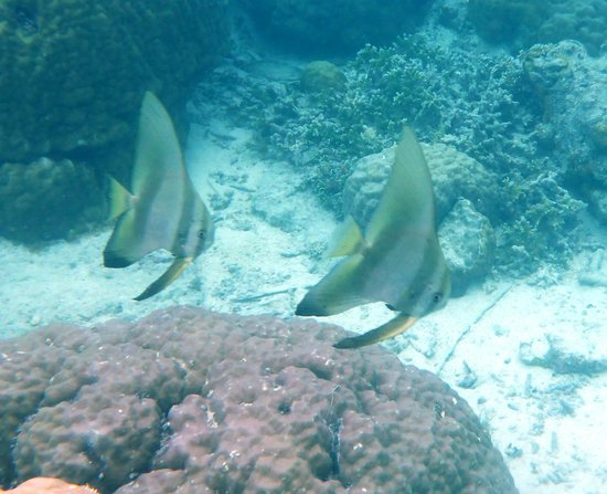 The Wilderness Lodge: fish of the house reef