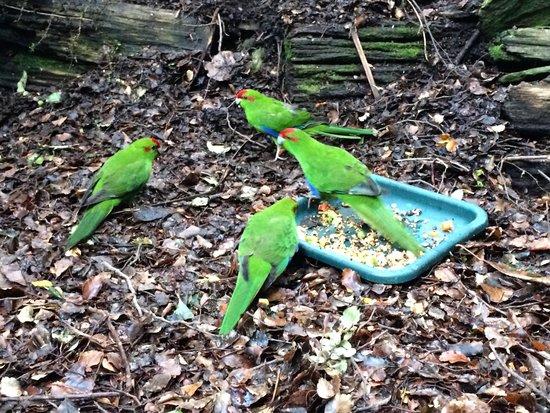 Kiwi Birdlife Park: Parakeet