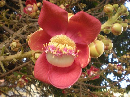 Alibi Guesthouse: un bellissimo fiori nel giardino