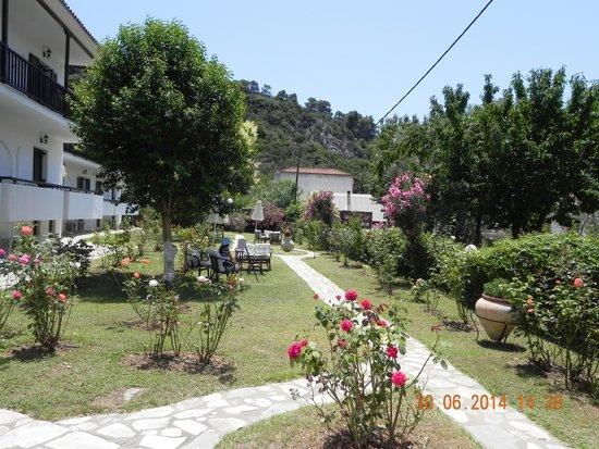 Afrodite Hotel : Сад отеля, номера в сторону пляжа