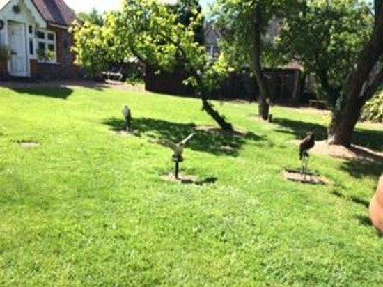 West Sussex Falconry: Birds of prey in the garden