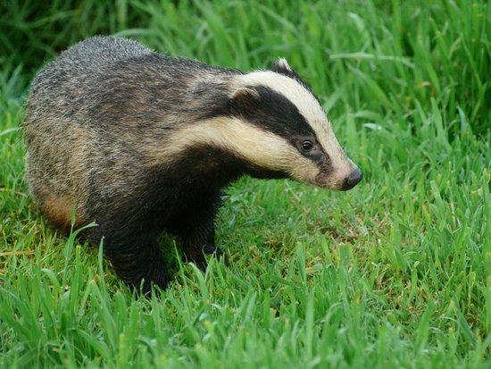 North Buckham Farm: Photo taken from the farm's badger hide
