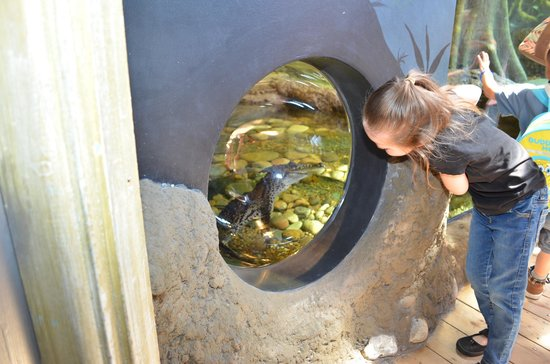 Oceanarium: I can see you!