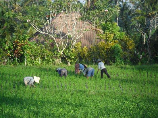 Bali Breeze Bungalows: View