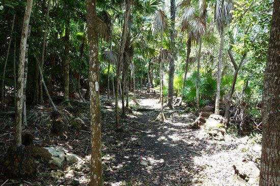 Foto de jard n bot nico dr alfredo barrera mar n puerto for Jardin botanico tarifas
