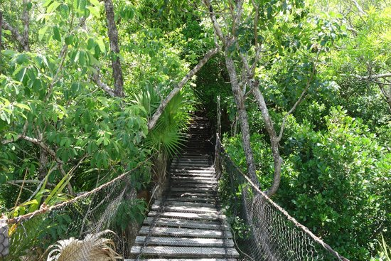 Jardin Botanico Dr. Alfredo Barrera Marin
