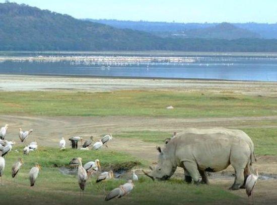 Diani Beach, Κένυα: lake nakuru