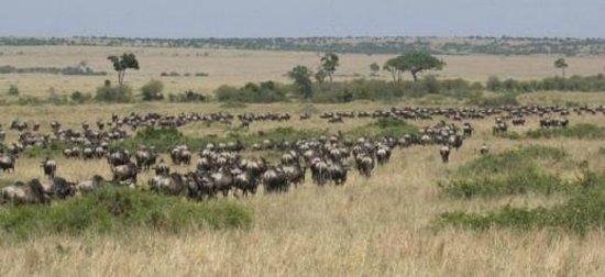 Diani Beach, Κένυα: wildebeest