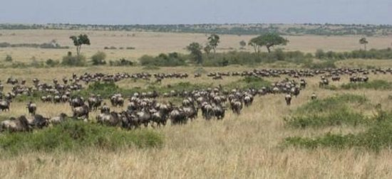 Диани-Бич, Кения: wildebeest