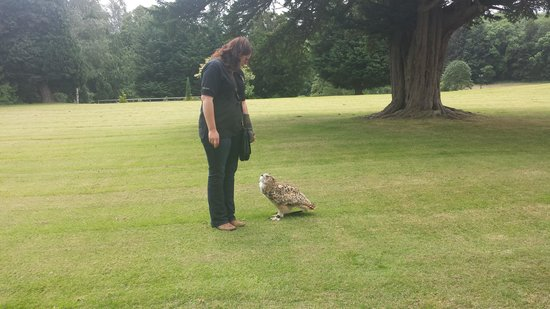 Dalhousie Castle Falconry : no mum, pick me up!!