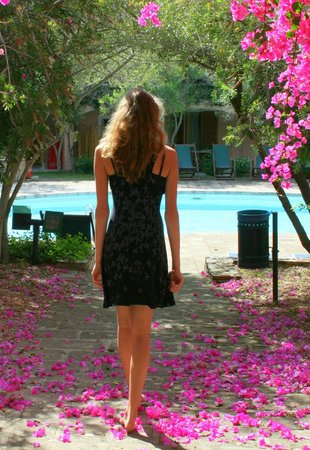 Resort Cala di Falco : Kleiner Pool im Blumenmeer