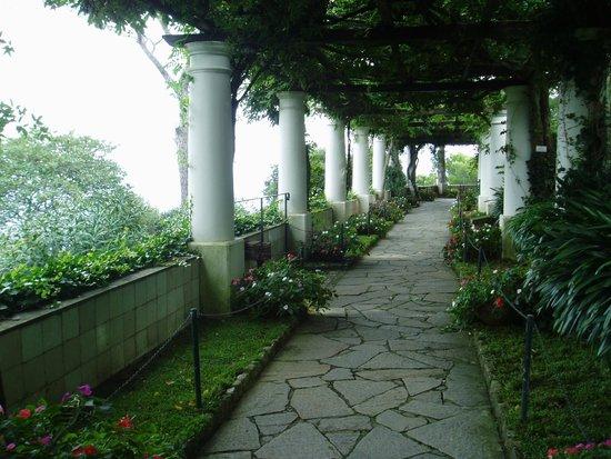 Villa San Michele : 美しい藤棚のテラス