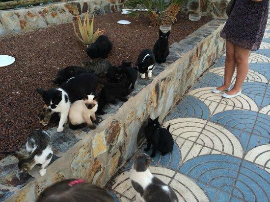 Paradise Valle Taurito: Cats & Kittens