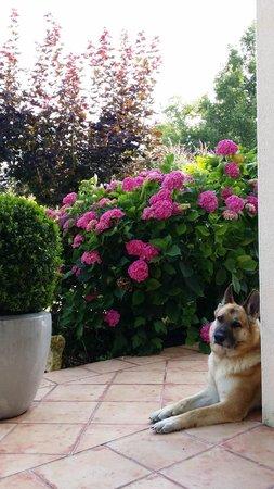 Maison Olea : Garden