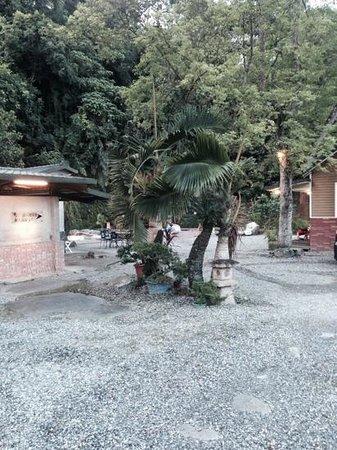 Ruisui Sunshine Hot Spring B&B : back yard & hot spring (remote back ground)