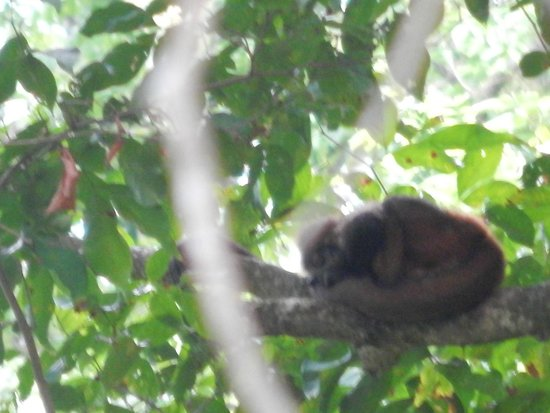Finca Exotica Ecolodge : Squirrel Monkey and baby