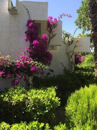 Blue Horizon Hotel: Garden
