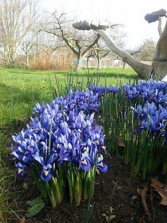 Coventry, UK: Ryton Gardens